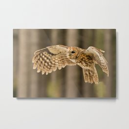 Tawny Owl in Flight Metal Print