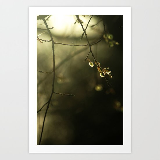 Bathed In Light  Art Print