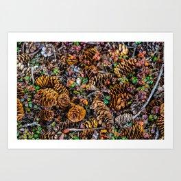 """Pine cones"" Art Print"