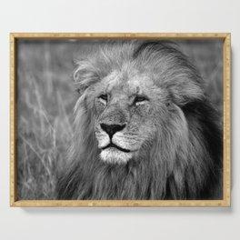 Masai Mara Lion Serving Tray