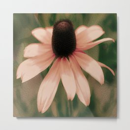 Soft Delicate Pink Daisy Metal Print