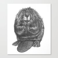 beaver Canvas Prints featuring Beaver by Nasir Nadzir