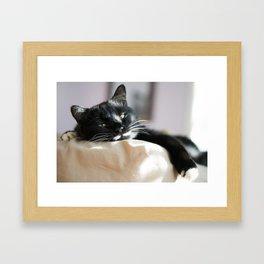 Black Cat Chilling Framed Art Print