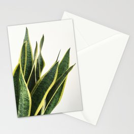 Sansevieria Stationery Cards