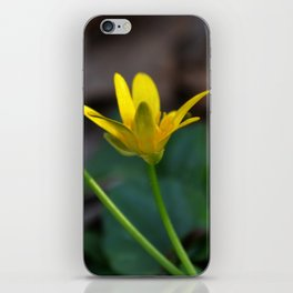 Reaching for the sun iPhone Skin