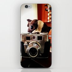 Terrier has an eye for photography iPhone & iPod Skin