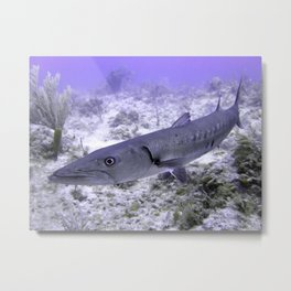 Up Close and Personal with a Barracuda Metal Print