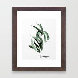 Eucalyptus - Australian gum tree Framed Art Print