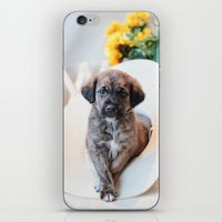 puppies iPhone & iPod Skins featuring Puppies 2 by Photography By SidD