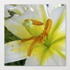 lily macro XIV Canvas Print