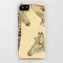 Vintage Illustration of a Giraffe (1908) iPhone Case