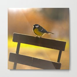 Great Tit On A Chair Metal Print