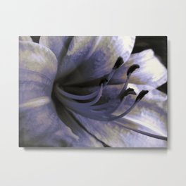 Lily Close Up and colorized Metal Print