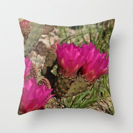 Beavertail Cactus in Bloom - II Throw Pillow