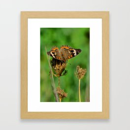 COMMON BUCKEYE BUTTERFLY IN THE FALL (Close-Up) Framed Art Print