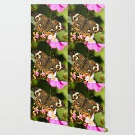 Buckeye Butterfly Wallpaper