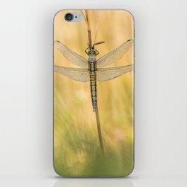 Black-tailed skimmer (Orthetrum cancellatum) iPhone Skin