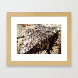 Borboleta Framed Art Print