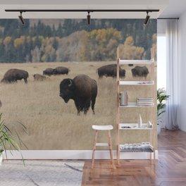 Grand Teton Bison Photography Print Wall Mural