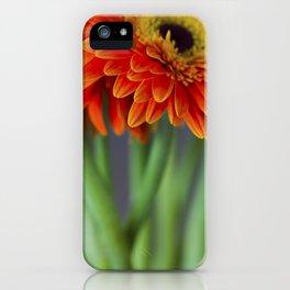 Macro photograph of orange gerbera daisies in a vase. iPhone Case