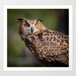 Portrait of an owl Art Print