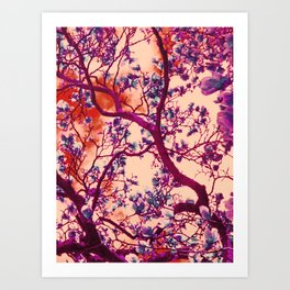 Magnolia Popalia Art Print