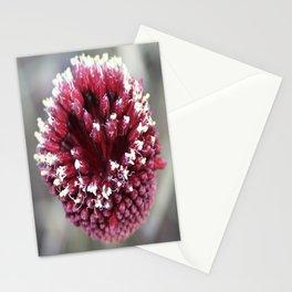 Macro of Round-Headed Leek Flower Allium Sphaerocephalon Stationery Cards