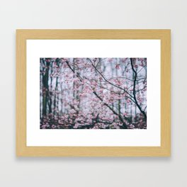 Cherry Blossom forest Framed Art Print
