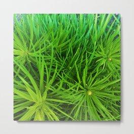Plantypoofs! Metal Print