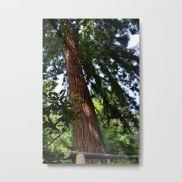 Shot in a Tree Metal Print