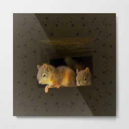 Young squirrels peering out of a nest #decor #buyart #society6 Metal Print