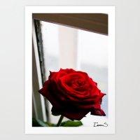 Rose of Valentine's day 2 Art Print