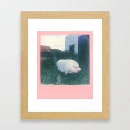 Dutch Piggy Framed Art Print