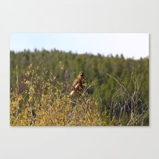 Red-tailed Hawk in the Tetons Canvas Print