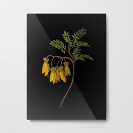 Sophora Tetraptera Mary Delany Floral Paper Collage Delicate Vintage Flowers Metal Print