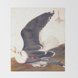 Black Backed Gul John James Audubon Scientific Vintage Illustrations Of American Birds Throw Blanket