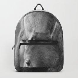 Original horses photo. Black & White, fine art, animal photography, landscape, b&w Backpack