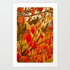 Fall Leaves Art Print
