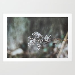 Cold Flower Art Print