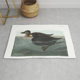 American scoter duck, Birds of America, Audubon Plate 408 Rug