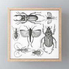 Vintage Beetle black and white drawing Framed Mini Art Print