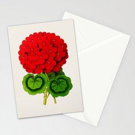 Vintage Scientific Floral Illustration Large Red Flowers Cranesbill Geranium Stationery Cards