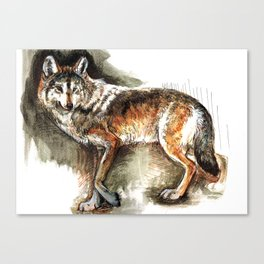 Totem Mexican Wolf ( Watercolor ) Canvas Print