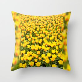 Yellow and red Stresa tulips abloom Throw Pillow