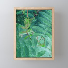 False spiraea Framed Mini Art Print