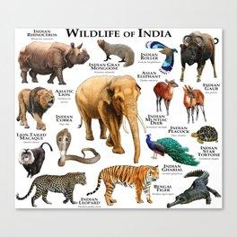 Wildlife of India Canvas Print