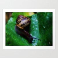 My Friend the Snail Art Print