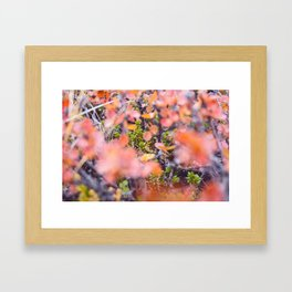 Colorful twigs Framed Art Print