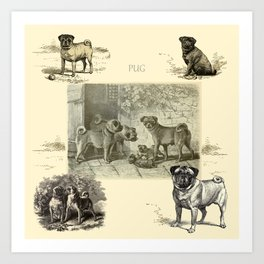 PUG DOGS Illustration Art Print