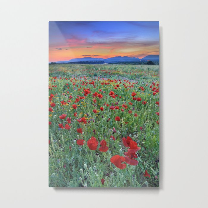 """""""Red dreams"""" Poppies at sunset Metal Print"""